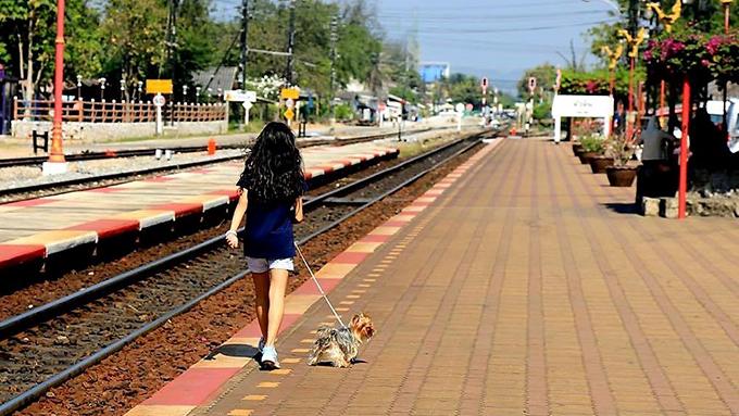 タイの日本人妻と中学生の世界を愛犬が広げてくれた! バンコクのドッグライフ