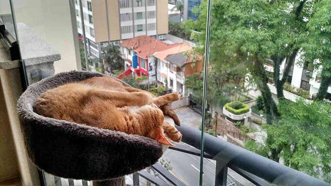 猫 バルコニー