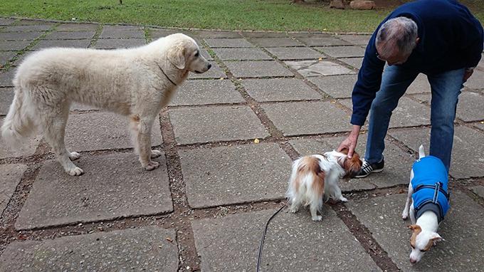 ブラジル 愛犬 犬