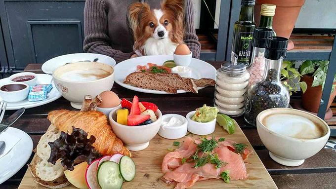 犬 愛犬 レストラン テラス
