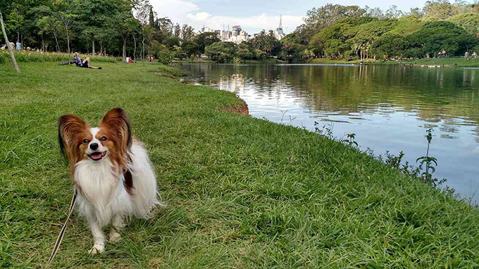 Ibirapuera 公園 ドッグラン 散歩コース 犬
