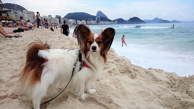 ブラジル 犬連れ 旅行