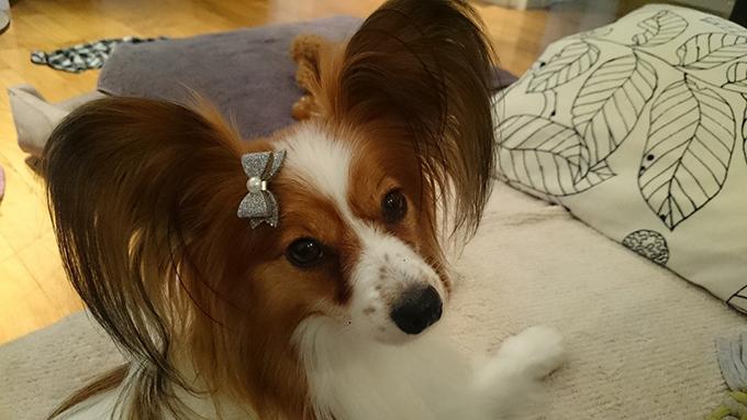 リボンシール 犬