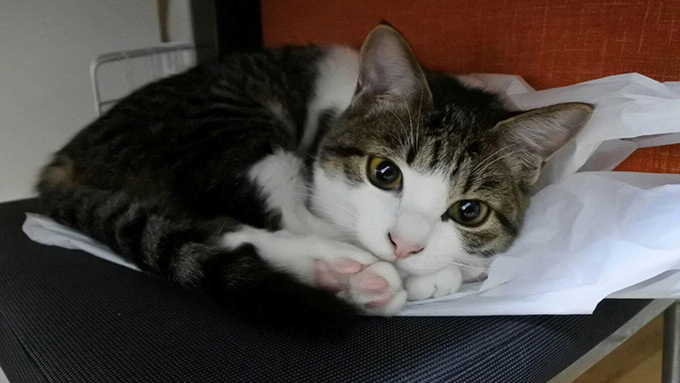 初めて迎えた保護猫が、家族の会話と笑顔を増やしてくれた!