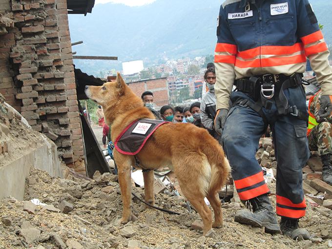 ネパール 夢之丞