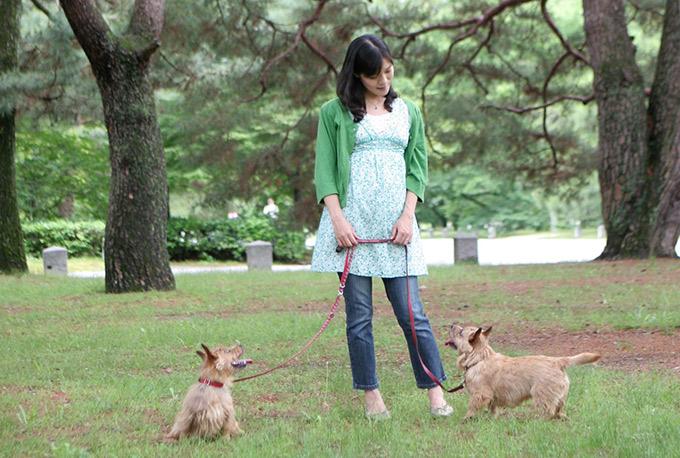 妊婦 イヌ 散歩 犬