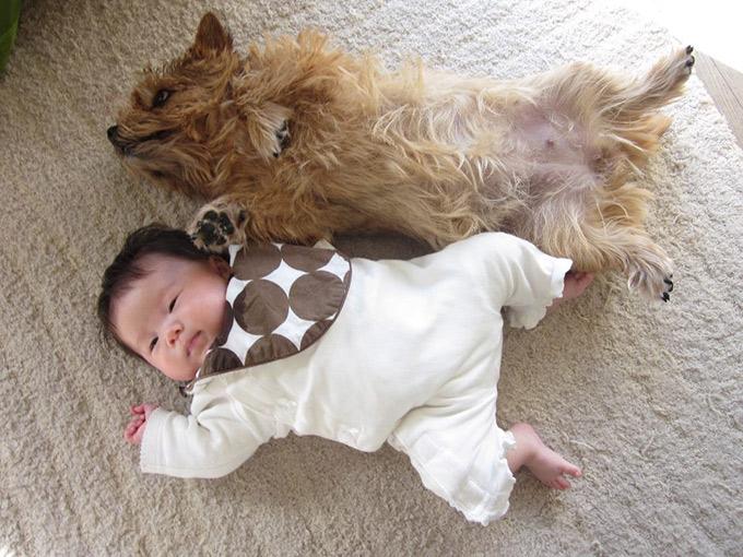 娘 赤ちゃん 愛犬 イヌ