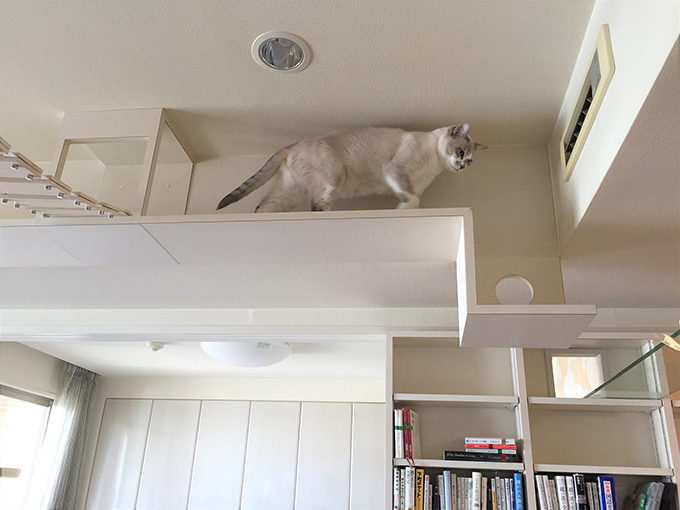 キャットウォーク ねこ 猫