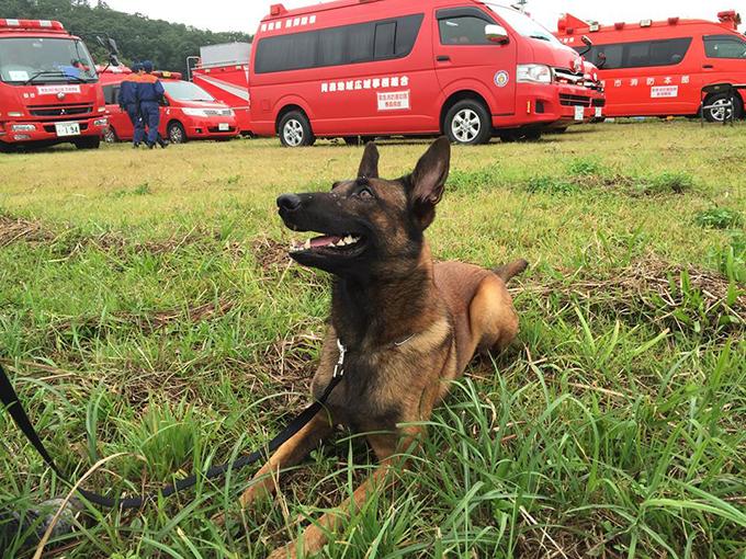 合同訓練 災害救助犬 いぬ 犬