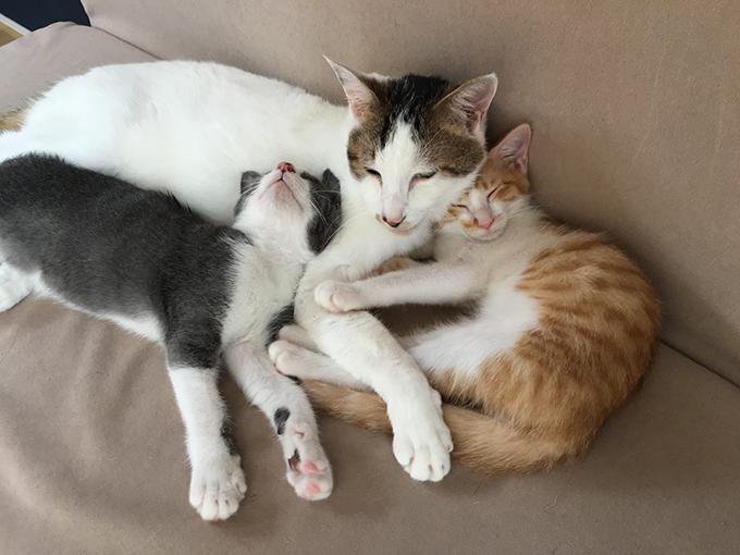 猫 寝てる 愛猫 ねこ