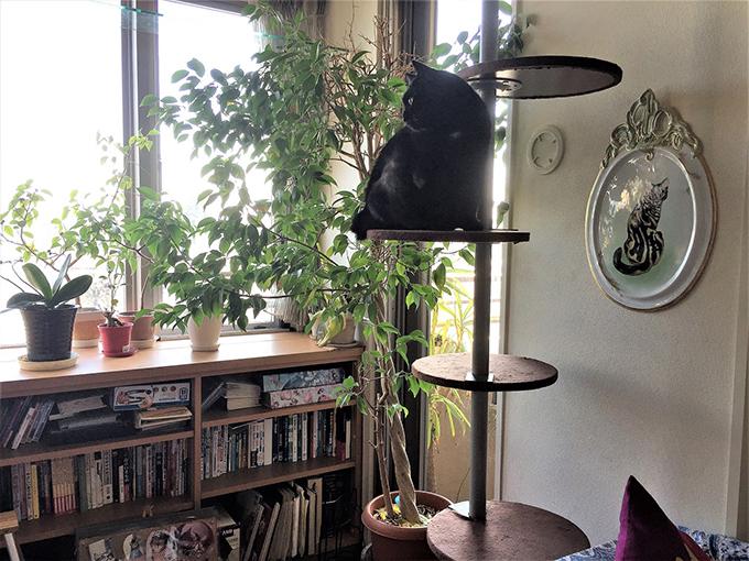 ねこ 猫 室内
