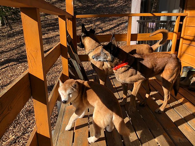 災害救助犬 山中湖村 いぬ 犬