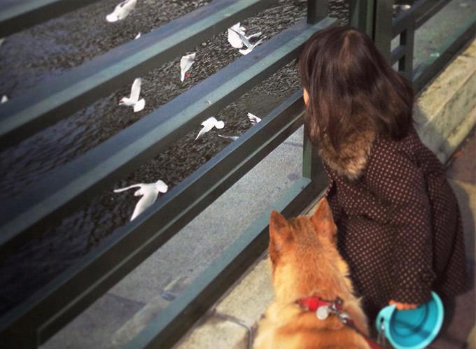 散歩 イヌ 愛犬 散歩