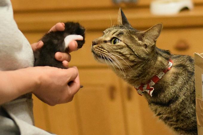 猫 仲良し 新しい家族 子猫 愛猫
