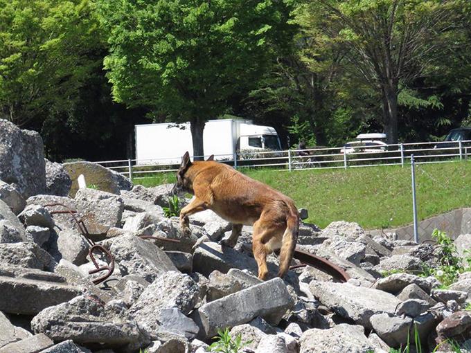 災害救助犬 いぬ 犬