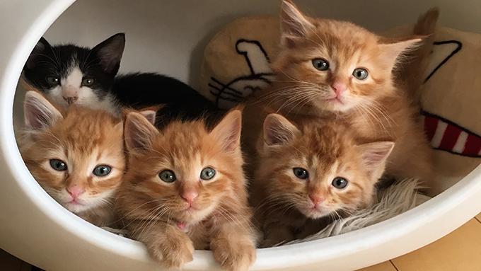 子猫100匹の新しい家族を見つけた、猫ボランティアの10年間