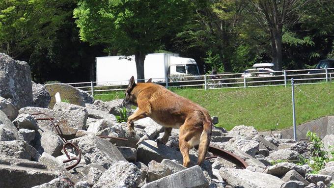 """災害救助犬になった愛犬と、東京から山梨へ移住。愛犬と一緒に""""働く""""喜び"""