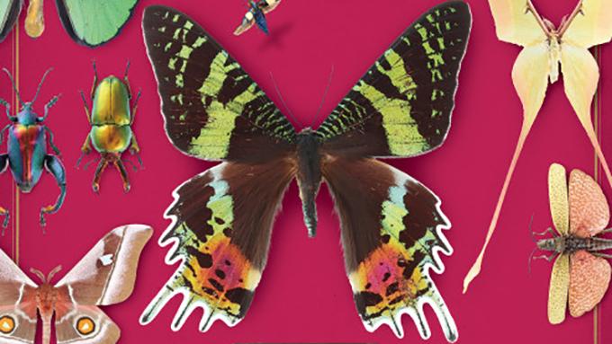イメージが変わるかも? 美しい昆虫標本の世界に興味ありませんか?
