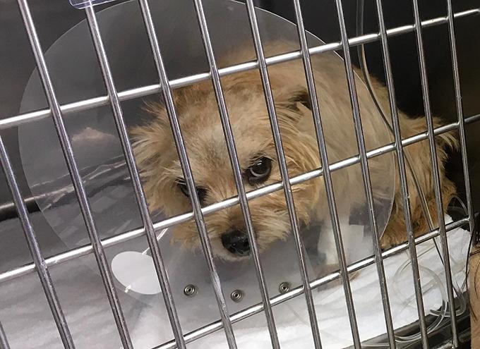 エリザベス カラー 動物病院 テリア イヌ いぬ 愛犬 犬