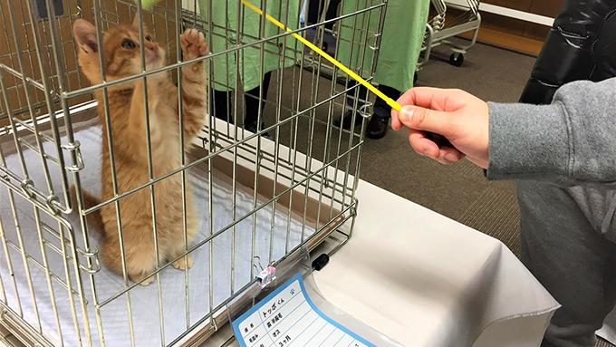 行政と区民が共働で開催する猫の譲渡会を取り巻く、数々のドラマ