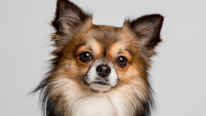 犬税、散歩しないと罰金!? 多様な世界のイヌ事情