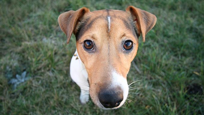 """犬を飼う新たな選択肢 """"保護犬を引き取る""""方法とシニアの犬飼育の実態"""