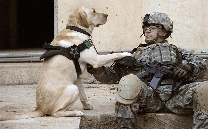 アメリカ軍 軍用犬 軍犬