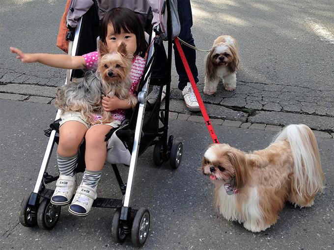 シー・ズー ベビーカー クリニック 愛犬 犬 イヌ いぬ ドッグ