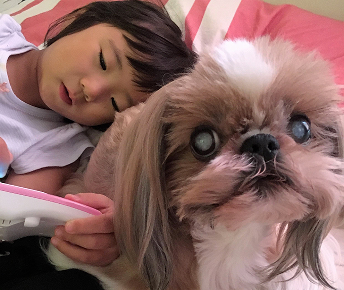 シー・ズー 仲良し 愛犬 犬 イヌ いぬ ドッグ