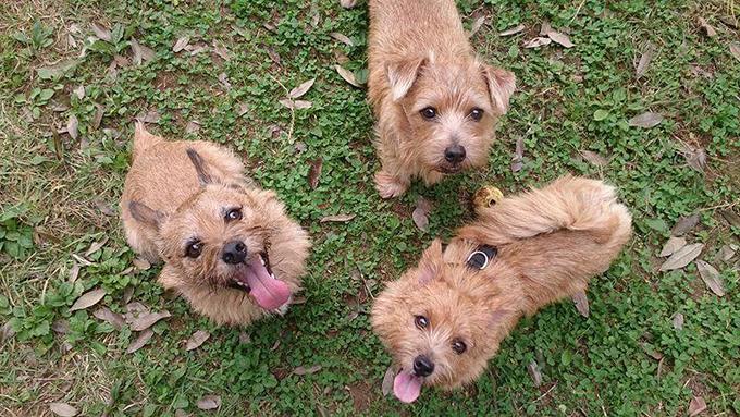 4度の流産の心の傷を癒してくれた、3頭の犬のチカラ