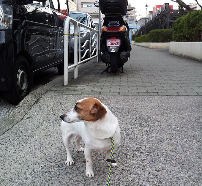 保護 保護犬 イヌ 犬 いぬ 愛犬