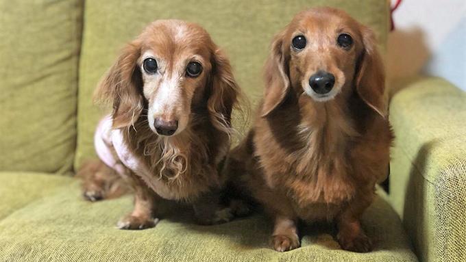 単身赴任の支えだった愛犬の、命の危機と出産とガン闘病生活