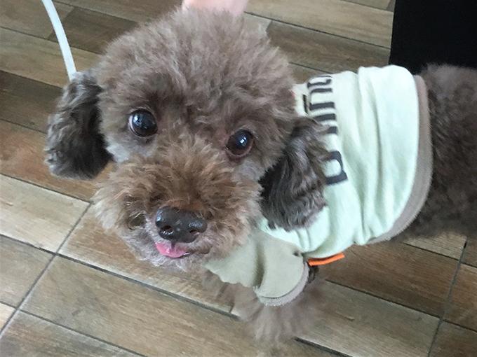 ASILO Pet Spa and Hotel 愛犬 イヌ 犬 いぬ ワンちゃん わんちゃん ペットホテル
