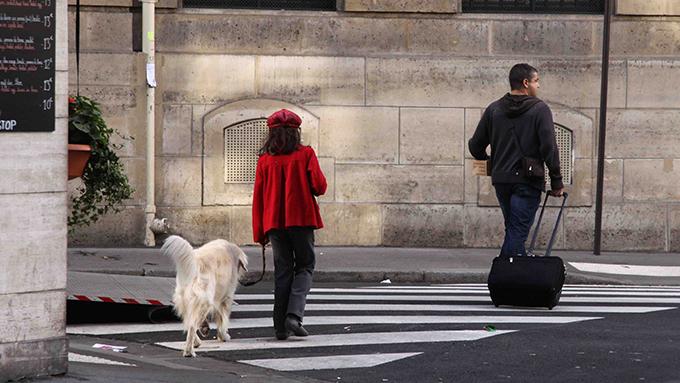 12歳の少女の保護犬活動と、今も真相不明の迷い犬の結末とは