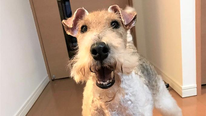 繁殖引退シニア犬のセカンドライフは、初体験と愛情に包まれて