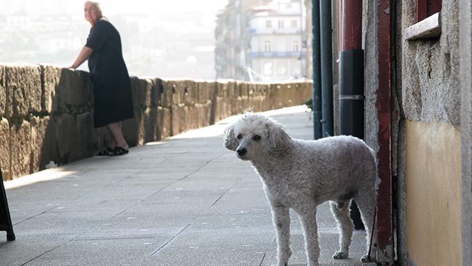 ポルトガルのゆったり自由なドッグ&キャットライフ