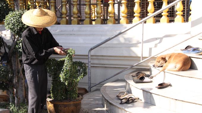 タイ仏教寺に犬が多い理由は? 僧侶の友で、怠け者の代名詞でもある寺犬の生活