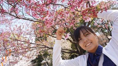 DTブーティーと桜.jpg
