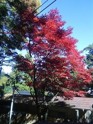 1110武蔵御嶽神社.jpg