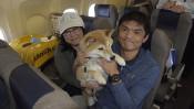 日本初!愛犬家の夢を叶えたANA「ワンワンフライト」とは? 【わん!ダフルストーリー】