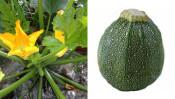 夏野菜『ズッキーニ』についてあなたは何を知っていますか? 【鈴木杏樹のいってらっしゃい】