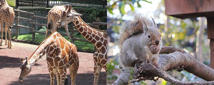 多摩動物公園,井の頭自然文化園