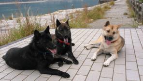 「犬は私の守り神」。紀州犬+甲斐犬2頭に守られる幸せな日々 【わん!ダフルストーリー】