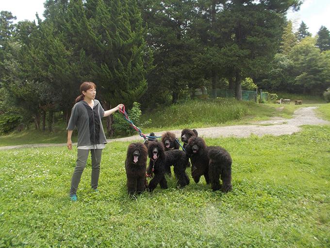 子犬たちと斉藤さん
