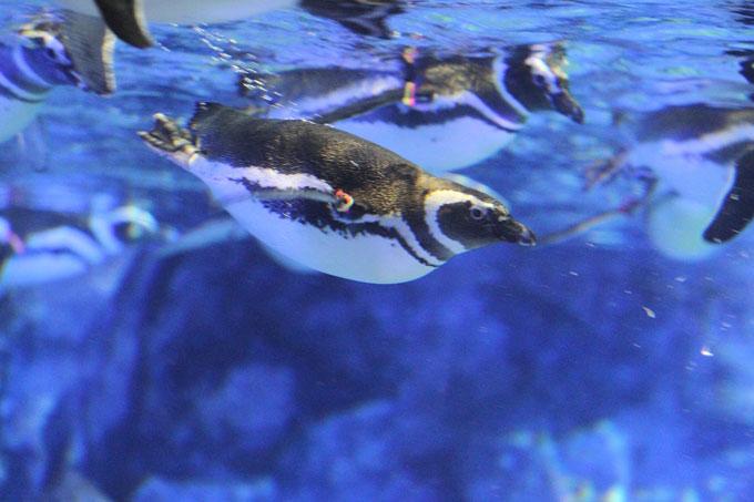 すみだ水族館,ペンギンワッチ