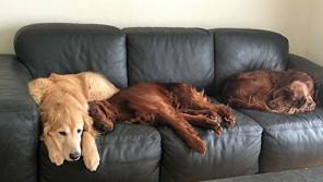 我が家の宝物は大型犬3兄弟!犬たちが教えてくれた「新しい世界」