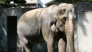 動物園の高齢化 日本の繁殖研究に期待! 【ひでたけのやじうま好奇心】