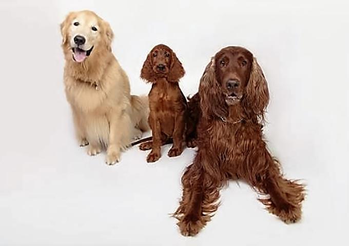 伊藤家の三兄弟!左からルーク、カイル、アッシュ