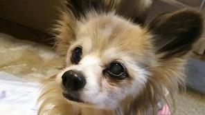 愛犬が満20歳に。 長寿の秘訣は。幼いころのあの習慣!【わん!ダフルストーリー】