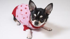 寒い冬。犬に洋服って着せるべき?【ペットと一緒に vol.5】